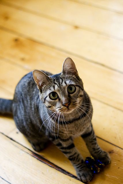 Adolescent Cats What To Expect And What You Can Do Cattime In 2020 Cats And Kittens Kittens Beautiful Cats