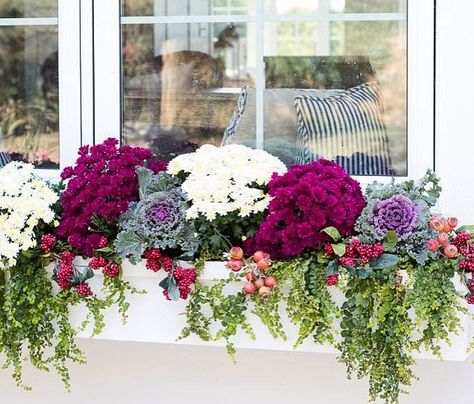 Cheap and easy fall window boxes ideas 13 Fall Window Boxes, Window Box Flowers, Fall Containers, Succulent Containers, Container Flowers, Container Plants, Fall Planters, Mums In Planters, Garden Planters