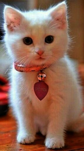 Cute Baby Kittens For Sale Free From Cute And Funny Cats And Kittens Videos Kittens Cutest Cute Animals Cute Cats