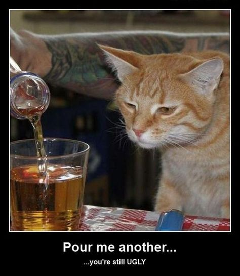 Poor drunk cat...