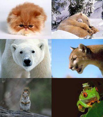 تفسير ظهور الحيوانات في الحلم مجلة رجيم Animals Polar Bear Polar