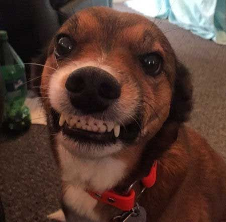 27 Smiling Dogs That Answer The Question Can A Dog Smile