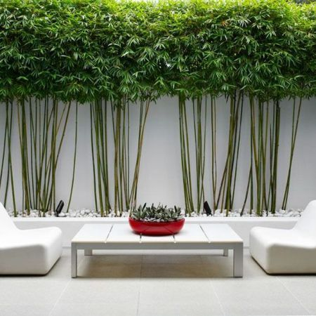 Bamboo Planter, How To Care For Outdoor Bamboo Plants