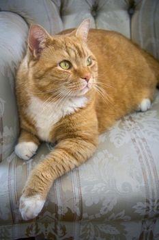 Pin By Vera Aguiar On Cats Orange Tabby Cats Cat Personalities Tabby Cat