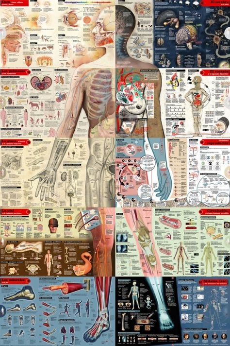 mucholderthen:  Emilo Amade viafrontal-cortex: A mega-graphic of a lifesize human person made up of 10 magazine-spreads, a project from El Mundo.  All ten double spreads were put together in order to get a real size human body. Art by from left to right and from top to bottom: 1- Emilio Amade, 2- Chema Matía, 3- Rafa Estrada, 4- Isabel González, 5- Mariano Zafra, 6- Beatriz Santacruz, 7 Isabel González y Beatriz Santacruz, 8- Mario Chimeno, Mariano Zafra and 10- Emilio Amade. Research done ...