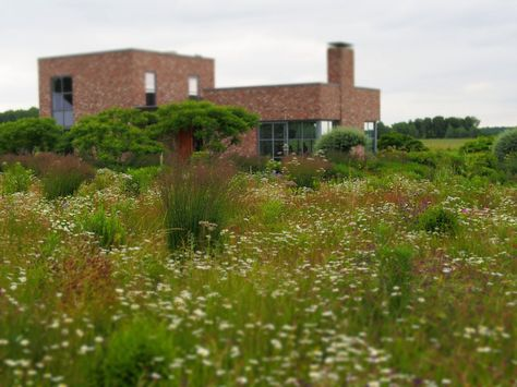 Oudolf's personal garden in 2013, Hummelo, The Netherlands. photo Tony Spencer   The New Meadow: The Oudolf design studio in back
