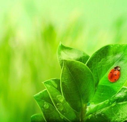 Tumbuh Tumbuhan Alam Hijau Yang Indah Hd Gambar Alam Gratis Foto 5o Lukisan Dan Gambar Pemandangan Alam Yang Sangat Menginspirasi Kit Gambar Alam Hijau Gambar