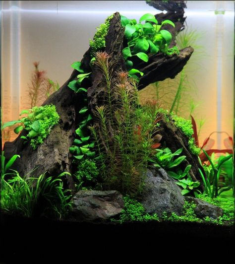 Nano aquascape, © Georg W. Just
