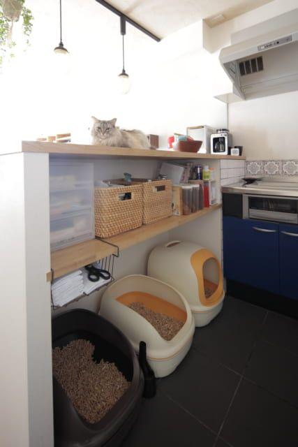 猫の家 に住んでいるみたい 5匹がのびのび暮らすマンション Sumai 日刊住まい 猫 家 猫 猫の遊び場