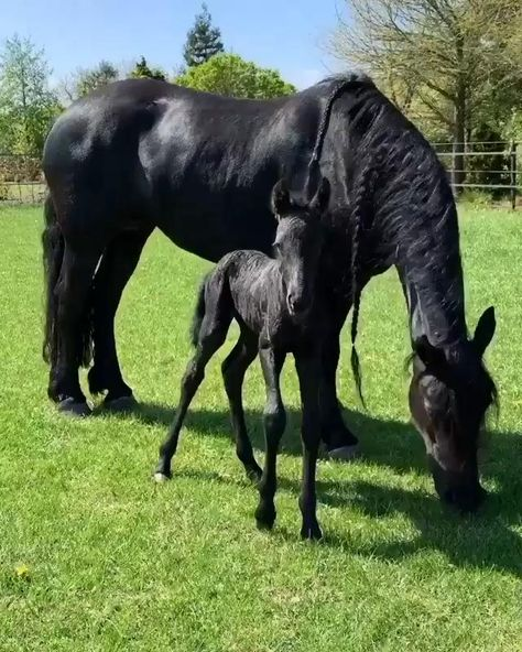 My baby horse you are so cute and beautiful. And mommy-horse (maybe daddy) you are so gorgeous. Such a beautiful family horse