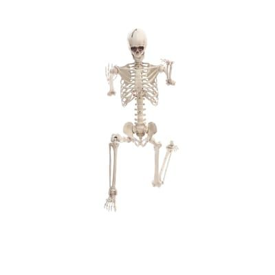 Home Accents Holiday 5 Ft Hanging Plastic Posable Skeleton With Led Eyes 5349 60272hd The Home Depot Doorway Decor Home Accents Halloween Displays
