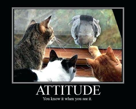 funny positive attitude quotes hindi – adaequat.org