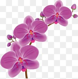 Cartoon Orchid Orchid Vector Orchid Flowers Flower Petal Flower Cartoon Vector Orchids Vector Orchids Orchid Flower Vector