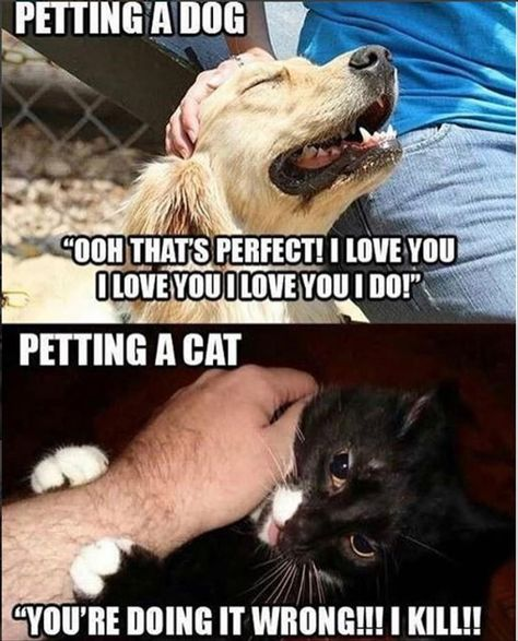 How To Pet Funny Dogs Cat Vs Dog Cute Funny Animals