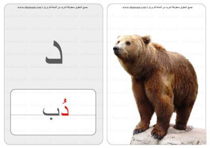 حرف كلمة صورة بطاقات الحروف والحيوانات 8 Brown Bear Animals Bear