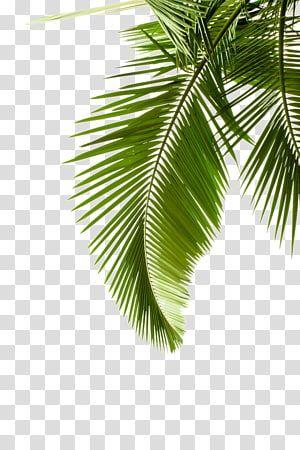 Paper Arecaceae Leaf Palm Branch Tree Leaf Pattern Green Leafed Tree Transparent Background Png Clipart Watercolor Leaves Leaf Print Art Tree Illustration