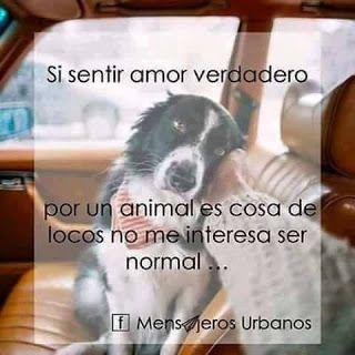 Ave Fenix Argentina Border Perdidos Y Encontrados Mdp Buenos Aires Pr Amor Animales Frases Mascotas Frases Perros Frases