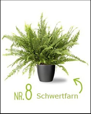 Luftreinigende Pflanzen Schlafzimmer: Schlafzimmer ...