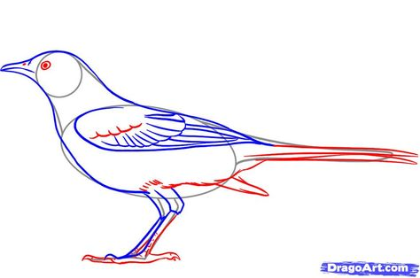 How To Draw A Mockingbird Step By Step Birds Animals Free Online Drawing Tutorial Added By Dawn April 24 2010 10 Drawings Guided Drawing Online Drawing