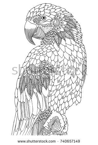 Macaw Hand Drawn Parrot Sketch For Anti Stress Adult Coloring