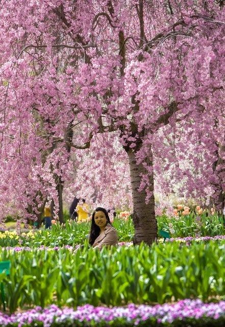 Pin By Becky And Vince On Cherry Blossom Travel Photography Cherry Blossom Australia Places To Visit