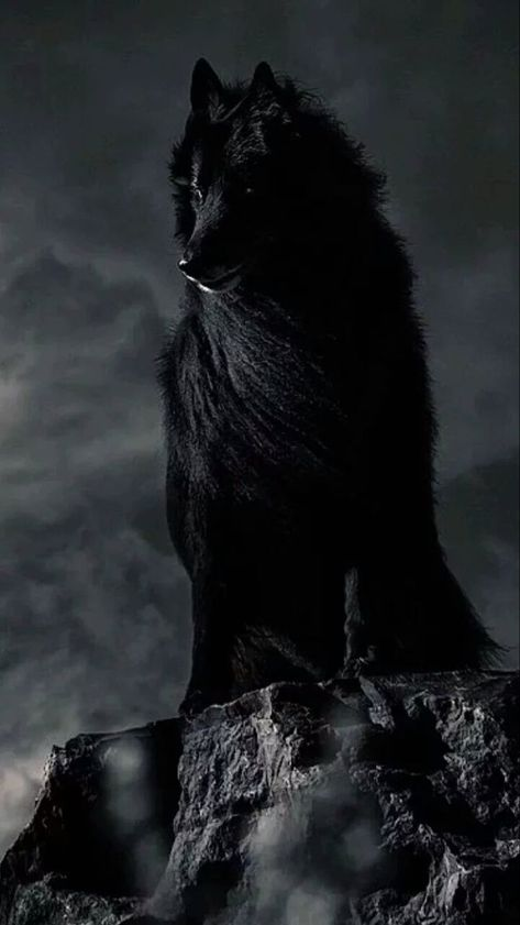 """I am there waiting, watching keeping to the shadows. But when you need me I'll step out of the shadows and protect what's ""Mine"" Moto For the Armenian Scouts ""Black Wolf Never sleeps Always Alert Always Awake"" Beautiful Creatures, Animals Beautiful, Cute Animals, Wild Animals, Baby Animals, Fantasy Wolf, Wolf Spirit Animal, Wolf Wallpaper, Wolf Love"