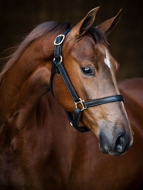 According to the May 2014 edition of Mental Floss magazine, horses have the largest eyes of any land animal, and they function like magnifying glasses – everything looks 50 percent larger to a horse than it does to a human! Additionally, a horse's peepers move independently, so they can focus in two different directions. This means their field of vision is a nearly 350-degree panorama.   - maly gaudin -  -  According to the May 2014 edition of Mental Floss magazine, horses have the largest eyes