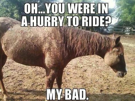 My horse in the summer - Horses Funny - Funny Horse Meme - - My horse in the summer The post My horse in the summer appeared first on Gag Dad. Funny Horse Memes, Funny Horse Pictures, Funny Horses, Cute Horses, Funny Animal Memes, Pretty Horses, Beautiful Horses, Funny Animals, Horse Humor