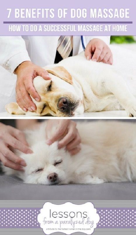 Pin On Paralyzed Dog Daily Care