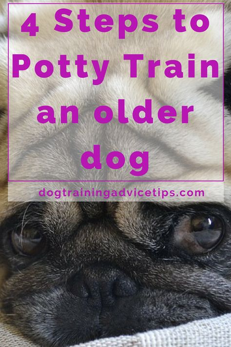 4 Steps To Potty Train An Older Dog Dog Training Tips Dog