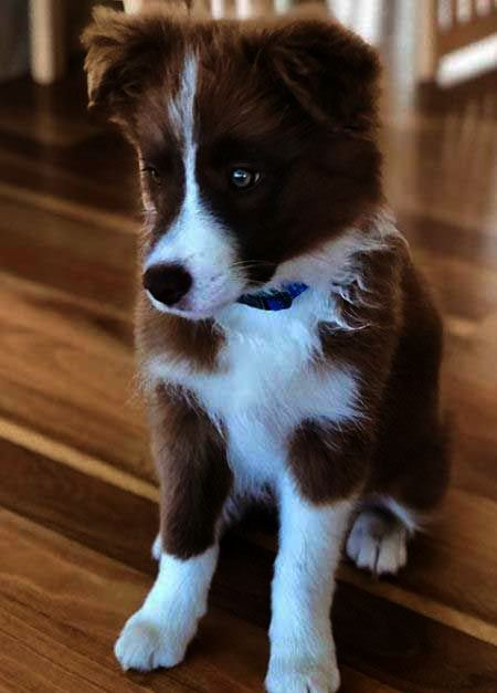 Pics Of Baby Dogs And Cats Beyond Baby Dogs Cute And Funny Dogs Than Bush Baby Pet For Sale Florida Baby Do Border Collie Puppies Collie Puppies Kinds Of Dogs