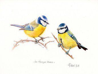 Des Oiseaux Dessin Oiseau Oiseaux Et Aquarelle