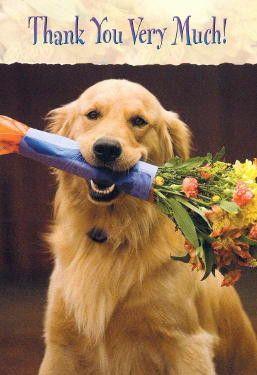 Golden Retriever Thank You Card Goldenretriever Golden Retriever Retriever Dogs Golden Retriever