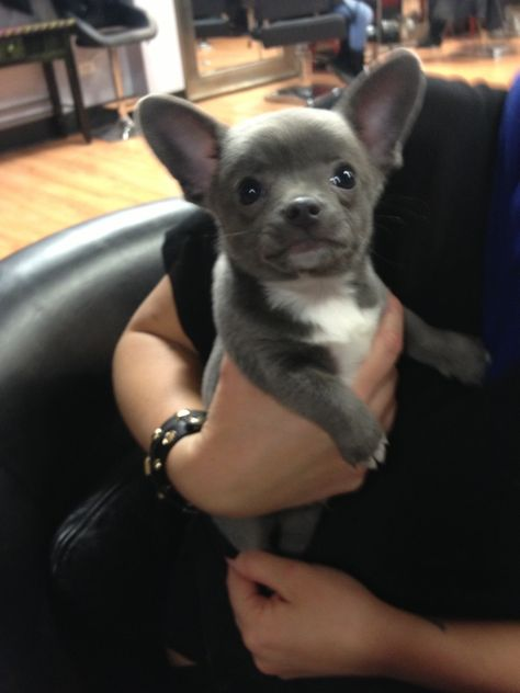 This little guy came into the salon today - Imgur
