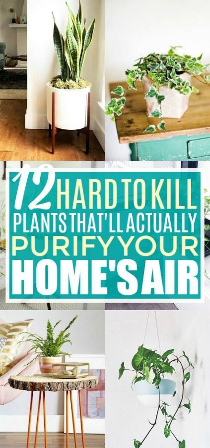 12 Amazing Looking Air Purifying Plants You Need In Your Home Air Purifying Plants Plants Low Maintenance Plants