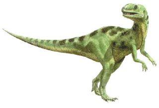 صور ديناصور انواع الديناصورات بالصور Dinosaur Museum Tiny Dinosaur Dinosaur