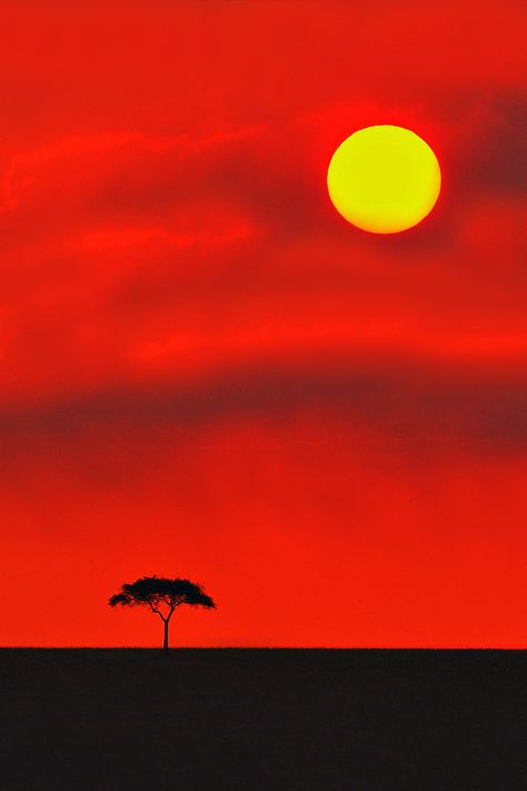 Golden Disc - Kenya, East Africa (by Aubrey Stoll)