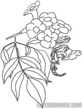 Strawberry Embroidery Flower Coloring Pages Adult Coloring