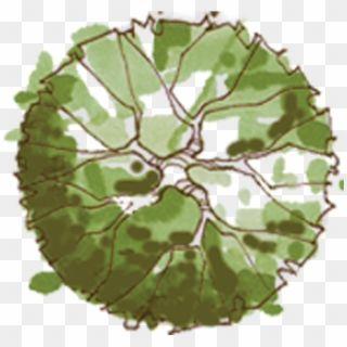 Download Tree Plan Png Tree Png Plan View Png Image With Tree Plan Tree Plan Png Trees Top View