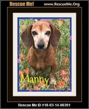 Getalong Dachshund Rescue Green Cove Springs Fl Available