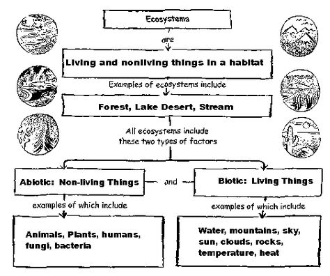 Animal Adaptations Unit Teachers can use these worksheets to teach