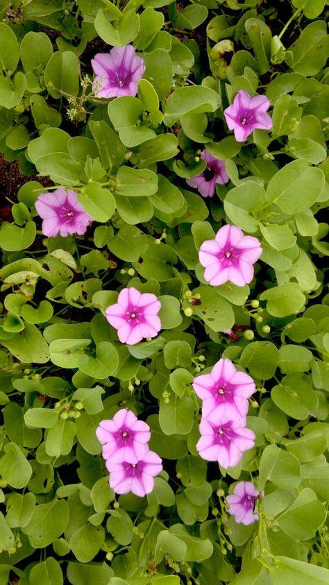 Malaysian Borneo Near Sandakan Discovery Rainforest Travel While You Translate Http Homeworktranslationjobs Com Sandakan Borneo Flowers