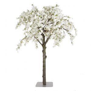 Unieke Decoratiebomen Bestellen Bloesembomen Moerbei Boom Bloesem