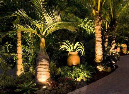 More Click Palm Tree Landscape Ideas Front Yards Palm Tree