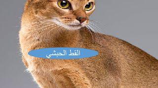 المهندس الزراعي انواع القطط الاليفة In 2020 Cats Kinds Of Cats Animals