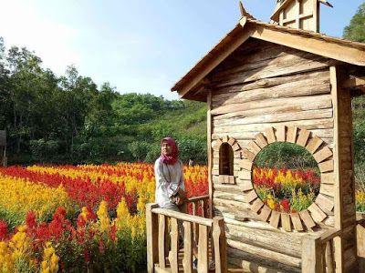 Taman Bunga Celosia Terbaru