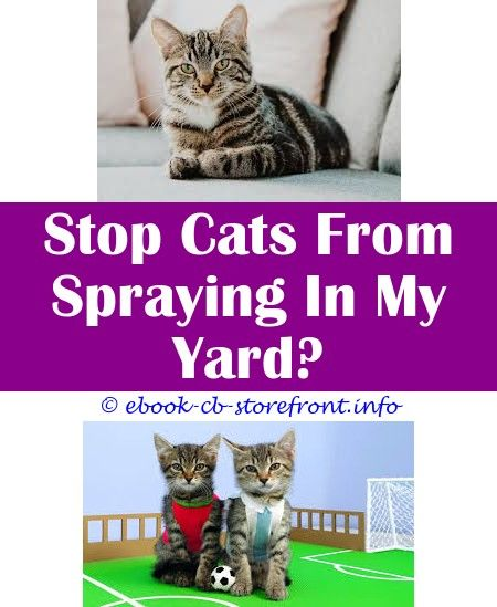 7b26c1f38928a86bcbc084cd523c1a30 - How To Get Rid Of Cat Spray Smell Under House