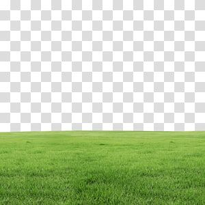 Field Of Grass Lawn Grass Transparent Background Png Clipart Poster Background Design Best Background Images Photo Background Images Hd