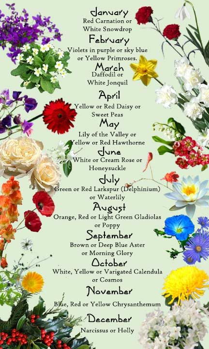 birth month flowers --  jan | white snowdrop or red carnation may | lily of the valley or red hawthorne jun | cream rose or honeysuckle oct | yellow calendula or cosmo dec narscissus or holly