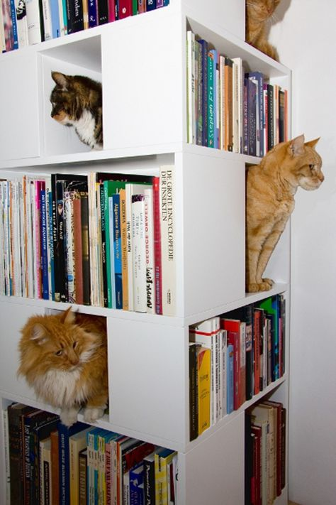 I can't get enough of cats doing weird things. // The CatCase: a Bookcase and a Ideal Playground for Your Cat